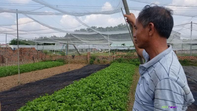 DongXoai-VietGap-Farm1